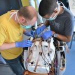 Alexandre et Ayoub font une chirurgie dorsale à Néo